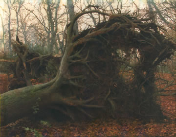 Burnham Beeches tree fall after the storm